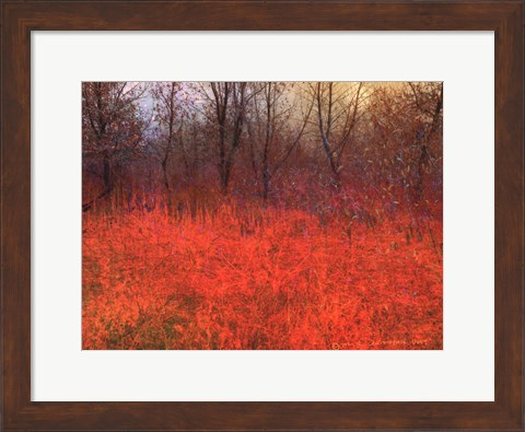 Framed Red Grass I Print