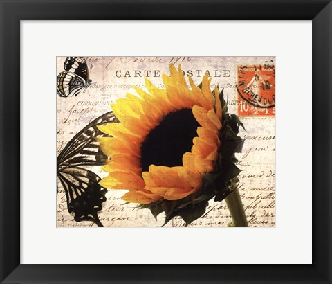 Framed Carte Postale Sunflower Print