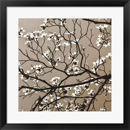 Framed Dogwood Square I Print