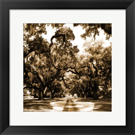 Framed Druid Oak Square II Print