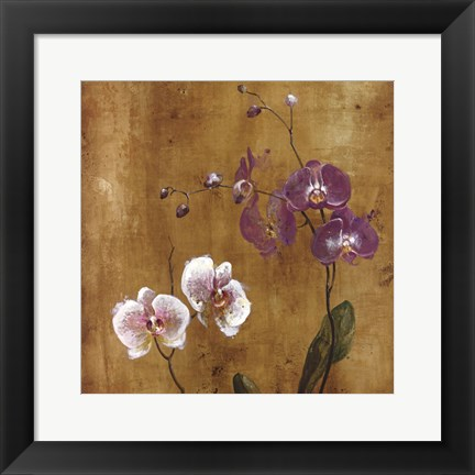 Framed Orchid Bloom I Print