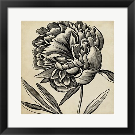 Framed Graphic Floral II Print