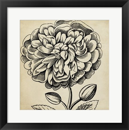 Framed Graphic Floral V Print