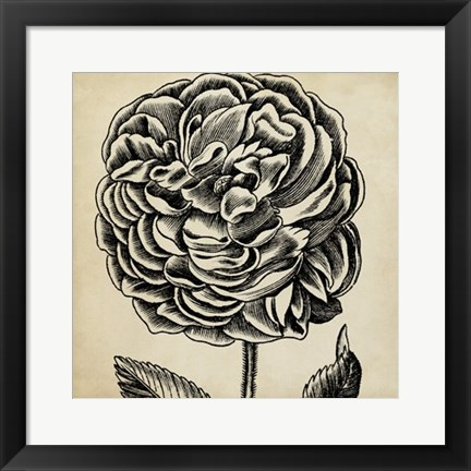 Framed Graphic Floral VII Print