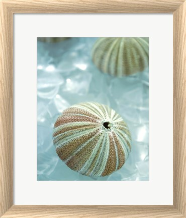 Framed Seaglass 4 Print