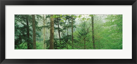 Framed Trees in spring forest, Turkey Run State Park, Parke County, Indiana, USA Print
