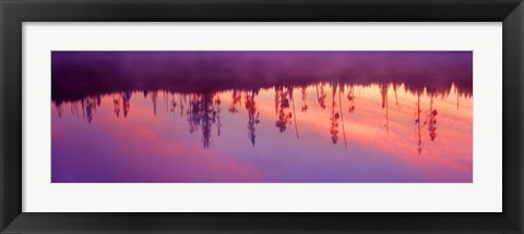 Framed Reflection of plants in a lake at sunrise, Taggart Lake, Grand Teton National Park, Wyoming, USA Print
