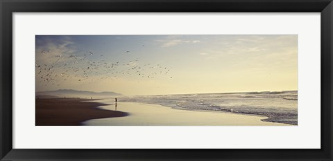 Framed Flock of seagulls flying above a woman on the beach, San Francisco, California, USA Print