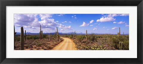 Framed Road, Saguaro National Park, Arizona, USA Print