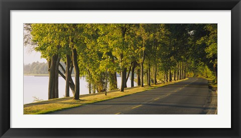Framed Trees along a road, Lake Washington Boulevard, Seattle, Washington State, USA Print