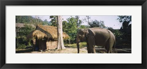 Framed Elephant standing outside a hut in a village, Chiang Mai, Thailand Print
