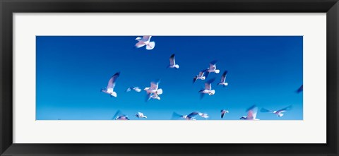 Framed Birds in flight Flagler Beach FL USA Print