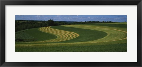 Framed Curving crops in a field, Illinois, USA Print