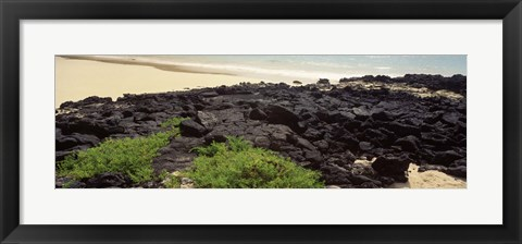 Framed Lava rocks at a coast, Floreana Island, Galapagos Islands, Ecuador Print