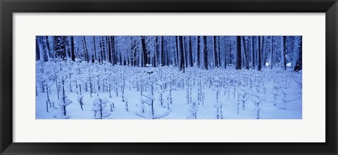 Framed Snow covered trees on a landscape, Yosemite Valley, Yosemite National Park, Mariposa County, California, USA Print
