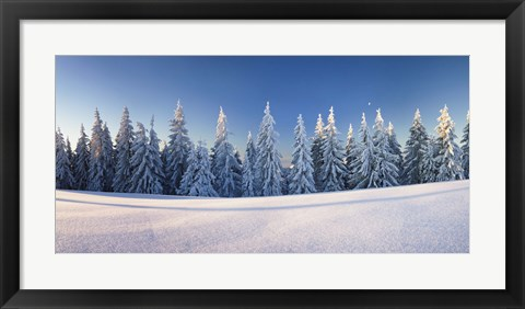 Framed Snow covered trees on a landscape, Belchen Mountain, Black Forest, Baden-Wurttemberg, Germany Print