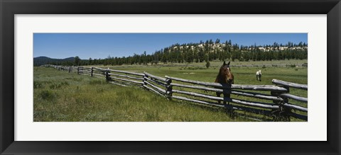 Framed Two horses in a field, Arizona, USA Print