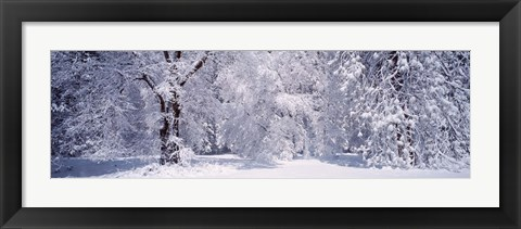 Framed Snow covered trees in a forest, Yosemite National Park, California, USA Print