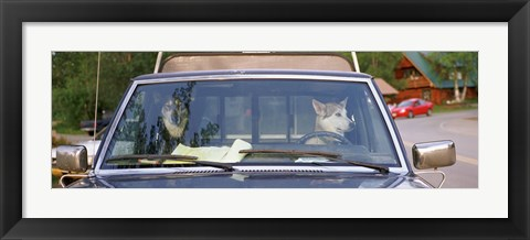 Framed Close-up of two dogs in a pick-up truck, Main Street, Talkeetna, Alaska, USA Print