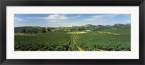 Framed High angle view of a vineyard, Carneros District, Napa Valley, Napa County, California Print