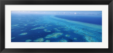 Framed Coral reef in the sea, Belize Barrier Reef, Ambergris Caye, Caribbean Sea, Belize Print
