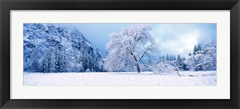 Framed Snow covered oak trees in a valley, Yosemite National Park, California, USA Print