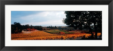 Framed Autum in the Vineyards, Provence-Alpes-Cote d'Azur, France Print