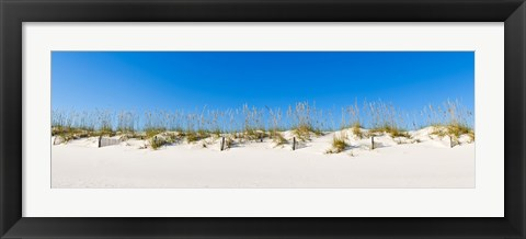 Framed Sand dunes on Gulf Of Mexico, Orange Beach, Baldwin County, Alabama, USA Print