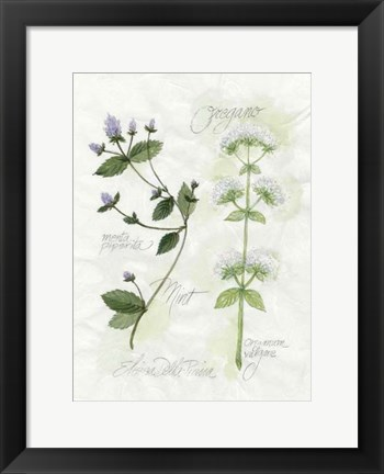 Framed Oregano & Mint Print