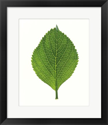 Framed Close up of Green Leaf Print