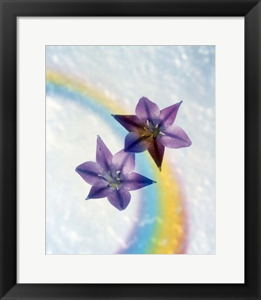 Framed Two violet flower on white blue and yellow background Print