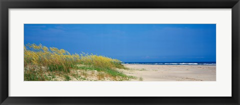 Framed Sea oat grass on the beach, Charleston, South Carolina, USA Print