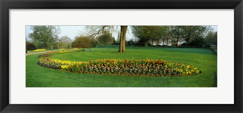 Framed Tulips in Hyde Park, City of Westminster, London, England Print