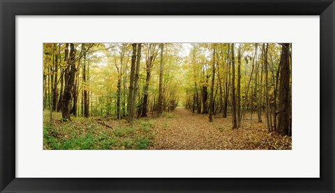 Framed Trail through the forest of the Catskills in Kaaterskill Falls, New York State Print