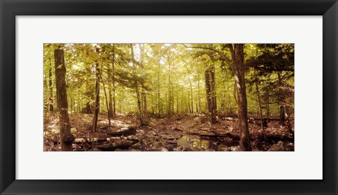 Framed Forest, Catskill Mountains, New York State, USA Print