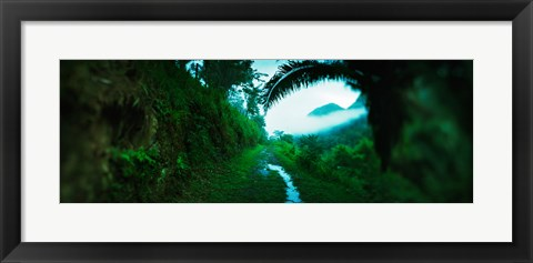 Framed Trail through a rainforest, Cayo District, Belize Print