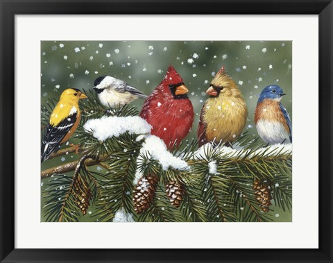 Framed Backyard Birds On Snowy Branch Print