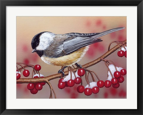 Framed Chickadee With Berries Print