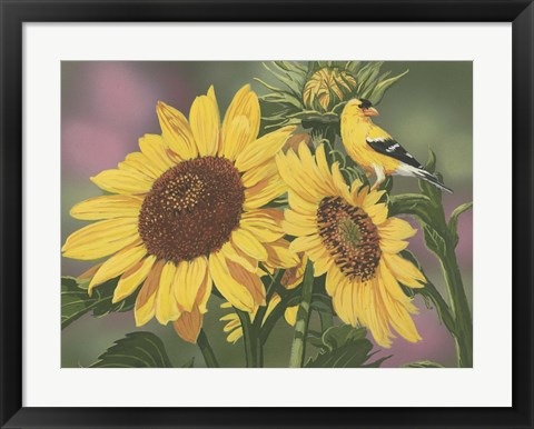 Framed Goldfinch And Sunflowers Print