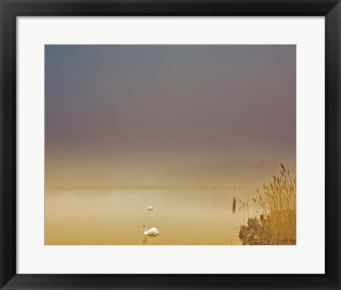 Framed Fog of Peace Print