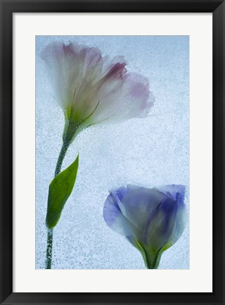 Framed Flowers on Ice-12 Print