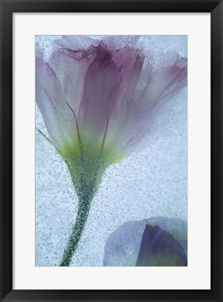 Framed Flowers on Ice-13-2 Print