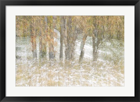 Framed Motion Trees 3 Print