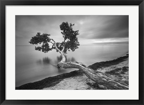 Framed Water Tree 10 BW Print