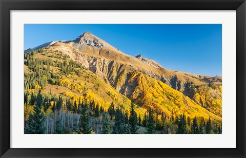 Framed Aspen tree on a mountain, Coal Bank Pass, San Juan National Forest, Colorado, USA Print