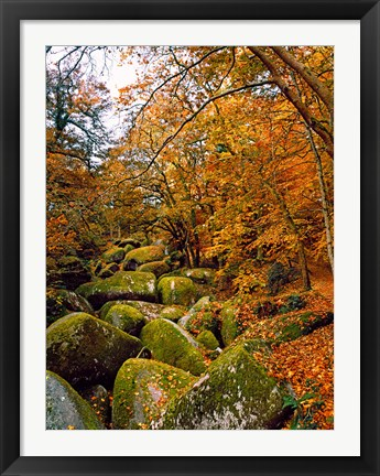 Framed Huelgoat Forest in Autumn, Finistere, Brittany, France Print