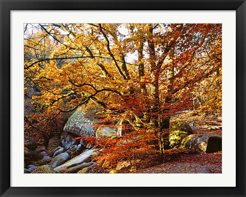 Framed Autumn in Huelgoat Forest, Brittany, France Print