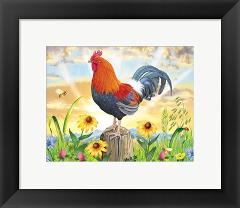 Framed Rooster At Dawn Print