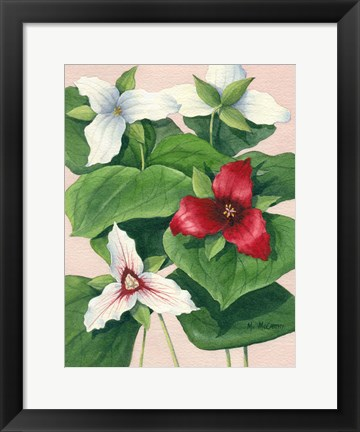 Framed Three Trilliums Print