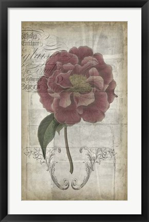 Framed French Floral III Print